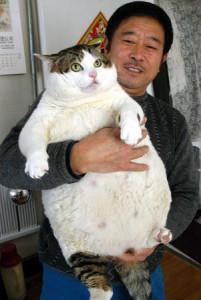 15 kg cat